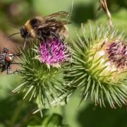 Zwei verschiedene Insekten haben verschiedene Bedürfnisse.